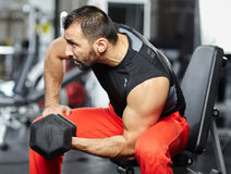 Man doing biceps workout in a gym Royalty Free Stock Photo
