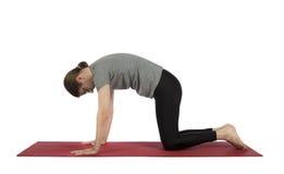 Man doing cat pose in yoga stock photos