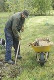 A man doing yardwork Stock Photography