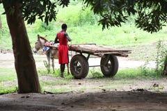 Man with donkey Royalty Free Stock Image