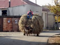 Man on donkey in village. Man riding donkey carrying straw in a traditional village in the republic of Georgia, Europe Stock Photography