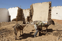 A man with donkeys, Ethiopia Stock Photo