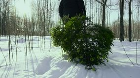A man drags a felled christmas tree home in the snow for the new year holiday new year and christmas. Christmas tree. Home decoration, slow mo stock footage