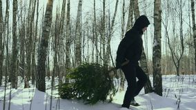 Man drags a felled christmas tree in the snow to his home and walk in the forest in the snow before new year in the town stock video