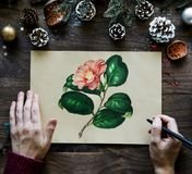 Man Drawing Pink Camellia Flower Beside Brown Pinecones royalty free stock photo