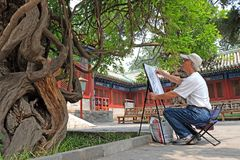 A man draws an ancient tree supposed to be over 300 years old in the temple of Confucius, Beijing, China royalty free stock photo