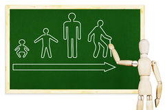 Man draws stages of human life on the green chalkboard Stock Photo