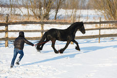 Man dressage black frisian horse Royalty Free Stock Images