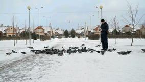 Man feeding big flock of pigeons in park in winter. Man dressed in a blue jacket feeding big flock of pigeons in a city park on a cold winter day stock footage