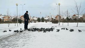 Man feeding big flock of pigeons in park in winter. Man dressed in a blue jacket feeding big flock of pigeons in a city park on a cold winter day stock video footage