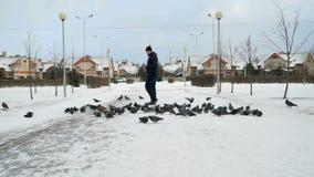 Man feeding big flock of pigeons in park in winter. Man dressed in a blue jacket feeding big flock of pigeons in a city park on a cold winter day stock video