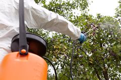 Farmer spraying toxic herbicides, pesticides or insecticides in an orchard. A man dressed in white protective work wear, spraying non-organic fruit with royalty free stock images