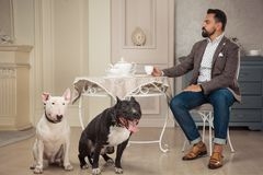 Man drinking tea at the table near Two dogs. Black pit bull or staphorshire terrier and white bulterrier are in the vintage interi Royalty Free Stock Photos