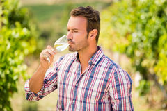 Man drinking wine. At vineyard on sunny day Stock Photography