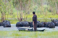 man drive his buffalo Royalty Free Stock Images