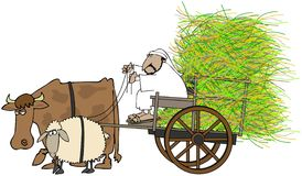 Man Driving A Hay Cart Royalty Free Stock Photos