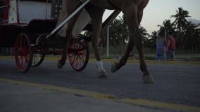 Man is driving a horse cart with passengers stock video footage