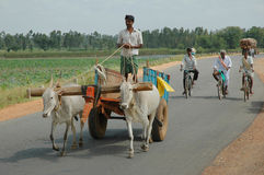 Man driving ox cart. Male farmer driving ox cart in Southern India through rural landscape Royalty Free Stock Images