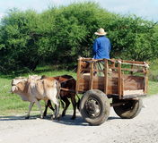 Man Driving Ox Cart In Cuba Royalty Free Stock Image