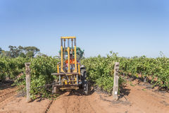 Man Driving Tractor Topping Grape Vines. Royalty Free Stock Photos