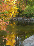 Man at Duck Pond in Autumn Royalty Free Stock Photography