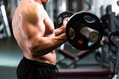 Man at Dumbbell training in gym Royalty Free Stock Photos
