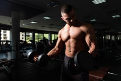 Man With Dumbbells Exercising Biceps. Man Working Out Biceps In A Gym - Dumbbell Concentration Curls royalty free stock photography