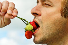 Man eating strawberry. Stock Image