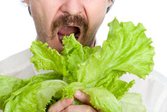Man eats sheet of the salad Royalty Free Stock Image