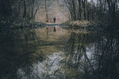 Man on edge of lake in forest in autumn Stock Images
