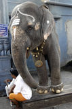 Man and elephant at the Menakshi Temple Madurai Royalty Free Stock Photo