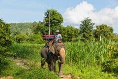 Man on the elephant Stock Photo