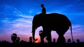 Man and elephant on twilight time Stock Image