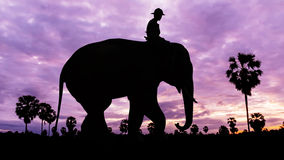 Man and elephant on twilight time Royalty Free Stock Photo