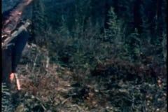 Man en vrouw die dierlijk karkas dragen stock video