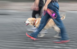 Man en vrouw die met een hond lopen Royalty-vrije Stock Foto