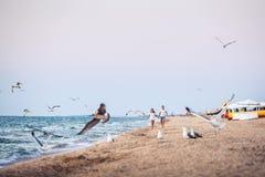 Man en vrouw langs de oever en schrik zeevogels is weggelopen die royalty-vrije stock foto's