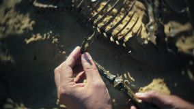 The man is engaged in excavating bones in the sand, Skeleton and archaeological tools. 4k stock video