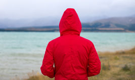 Man enjoying view, New Zealand. Rear view of a man looking at landscape, New Zealand Stock Image