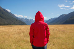 Man enjoying view, New Zealand. Rear view of a man looking at landscape, New Zealand Stock Photography