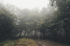 Man entering haunted forest Royalty Free Stock Image