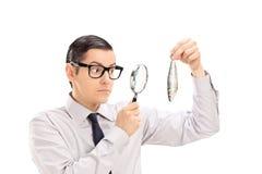 Man examining a fish through a magnifying glass Stock Photo