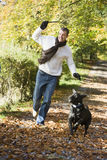 Man exercising dog in woodland Stock Photography