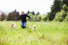 Man Exercising Dogs On Countryside Walk Stock Photo