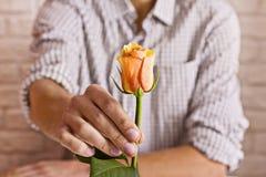 man för begreppskyssförälskelse till kvinnan Hållande apelsinros för man i händer Vykort för valentin` s Arkivfoton