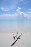 Man förgrena sig på stranden Royaltyfria Foton