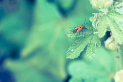 Man face bug is staying on the green leaf in vintage style Royalty Free Stock Image