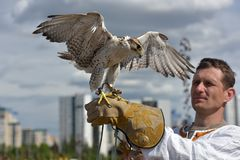 A man with a falcon on his hand in Slavic national clothes at th royalty free stock photo