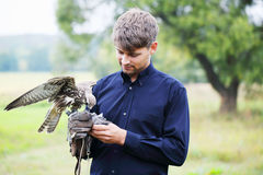 Man and falcon. The owner feeds his falcon dove meat Stock Photo