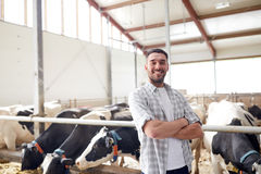 Man or farmer with cows in cowshed on dairy farm Royalty Free Stock Photo